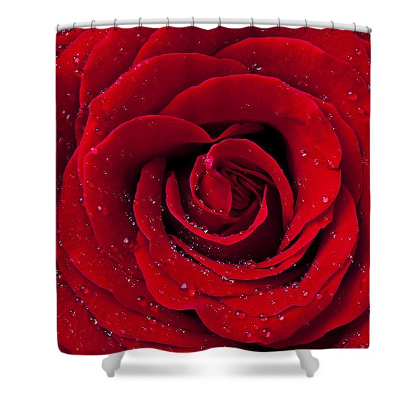 Red Rose With Dew Shower Curtain
