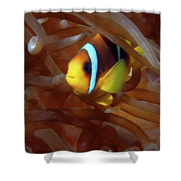 Red Sea Clownfish, Eilat, Israel 8 Shower Curtain