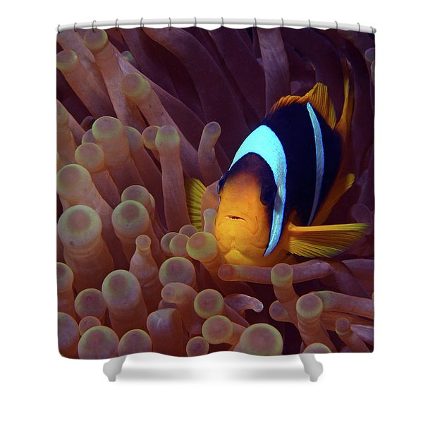 Red Sea Clownfish, Eilat, Israel 9 Shower Curtain