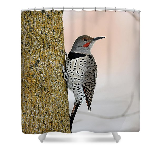 Red Shafted Northern Flicker Shower Curtain