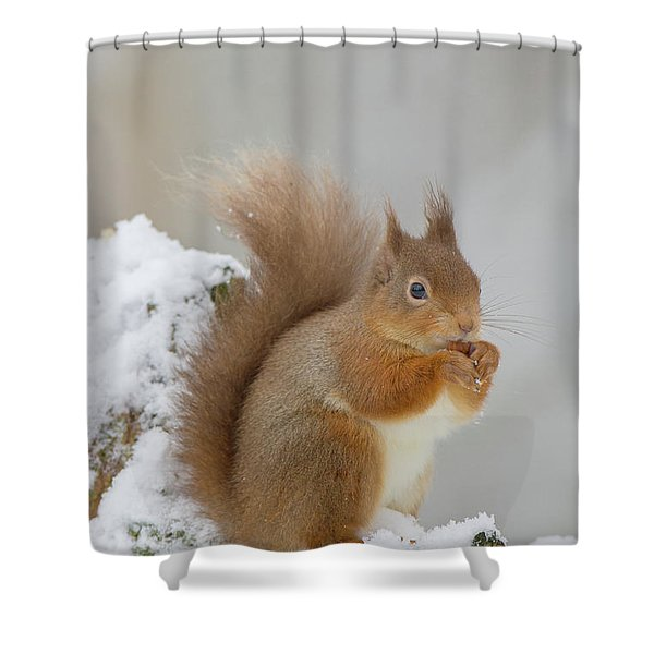 Red Squirrel In The Snow Side On Shower Curtain
