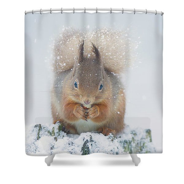 Red Squirrel Nibbles A Nut In The Snow Shower Curtain