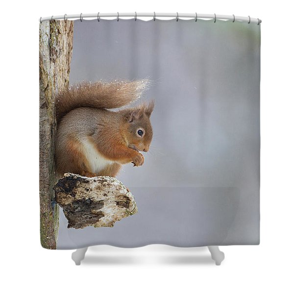 Red Squirrel On Tree Fungus Shower Curtain
