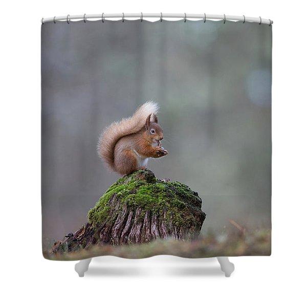 Red Squirrel Peeling A Hazelnut Shower Curtain