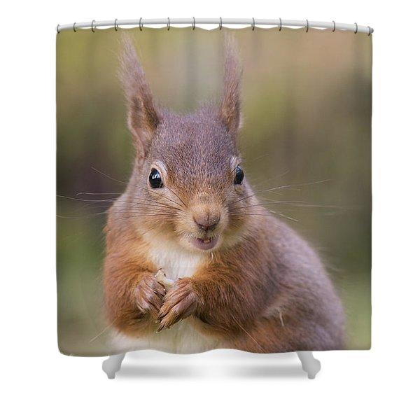 Red Squirrel - Scottish Highlands #18 Shower Curtain