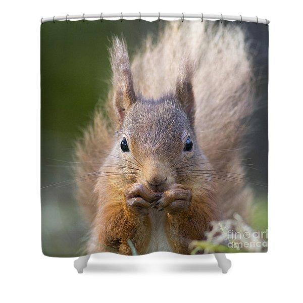 Red Squirrel - Scottish Highlands #28 Shower Curtain