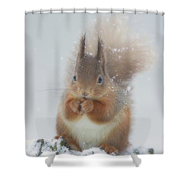 Red Squirrel With Snowflakes Shower Curtain