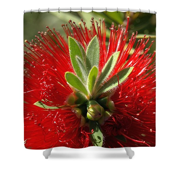 Red Surprise Shower Curtain