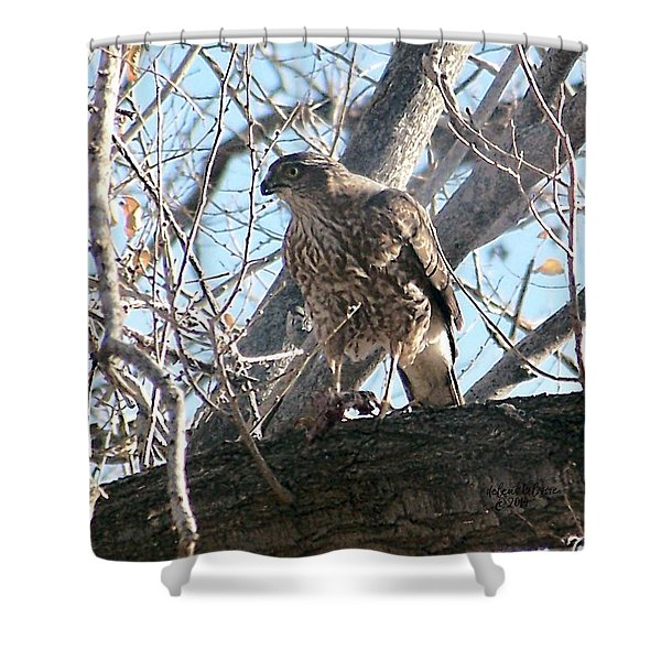 Shower Curtain featuring the digital art Red Tail Hawk by Deleas Kilgore