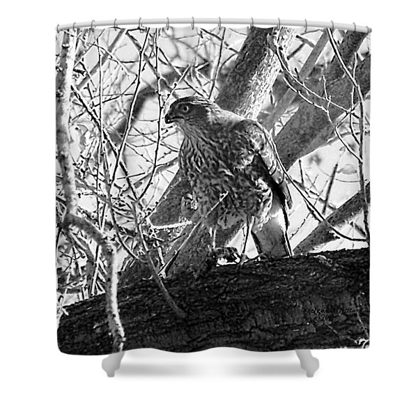 Shower Curtain featuring the digital art Red Tail Hawk In Black And White by Deleas Kilgore