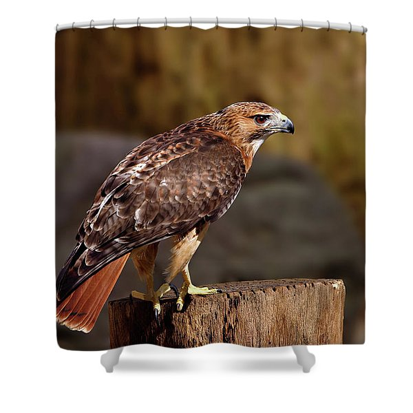 Shower Curtain featuring the photograph Red Tail Hawk by Ronnie and Frances Howard