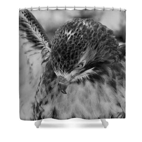 Red Tail In Black And White Shower Curtain