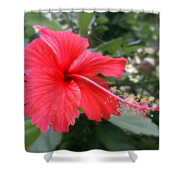 Red-tailed Flower Portrait Shower Curtain