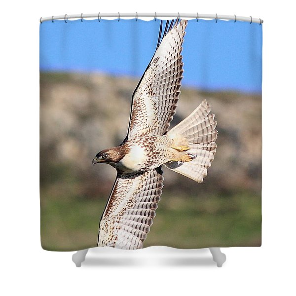 Red Tailed Hawk - 20100101-8 Shower Curtain by Wingsdomain Art and Photography
