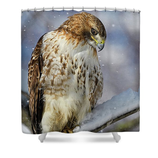 Red Tailed Hawk, Glamour Pose Shower Curtain