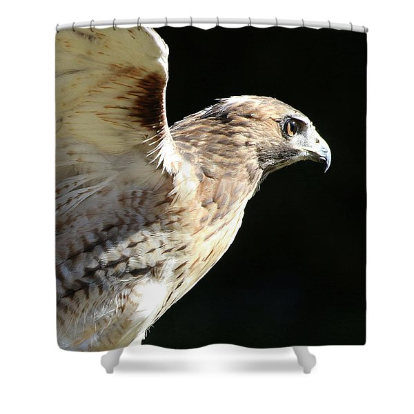 Shower Curtain featuring the photograph Red-tailed Hawk In Profile by William Selander