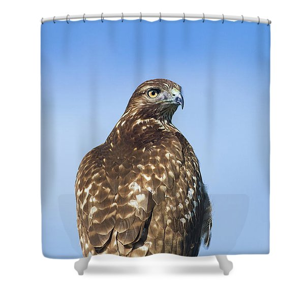 Red-tailed Hawk Perched Looking Back Over Shoulder Shower Curtain