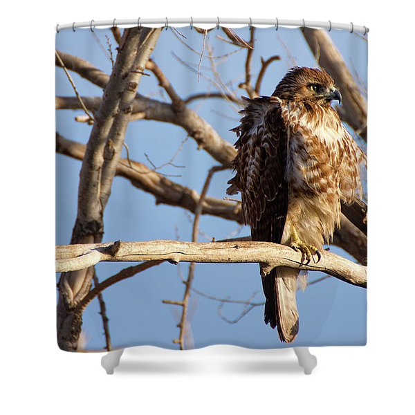 Shower Curtain featuring the photograph Red Tailed by John De Bord