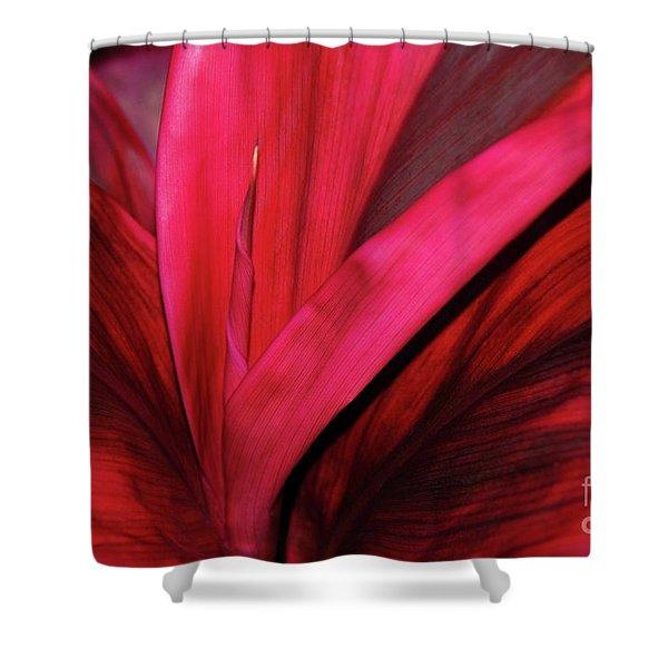 Red Ti Leaf Plant - Hawaii Shower Curtain