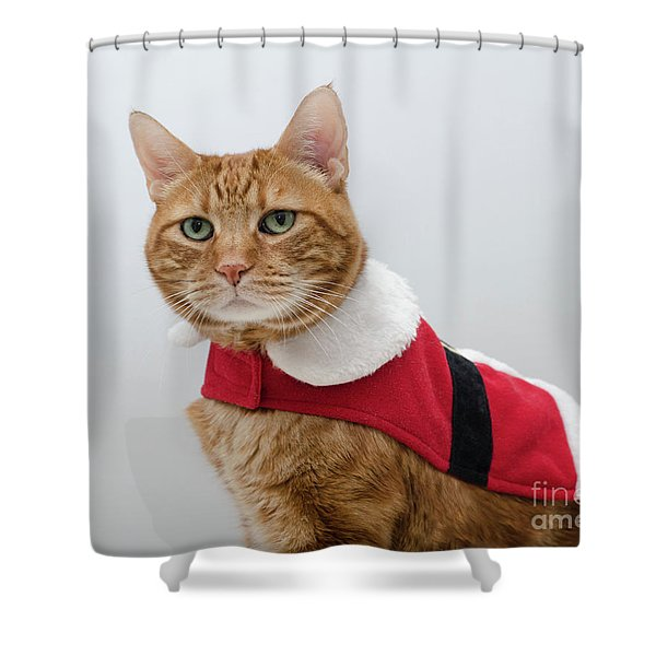 Red Tubby Cat Tabasco Santa Clause Shower Curtain