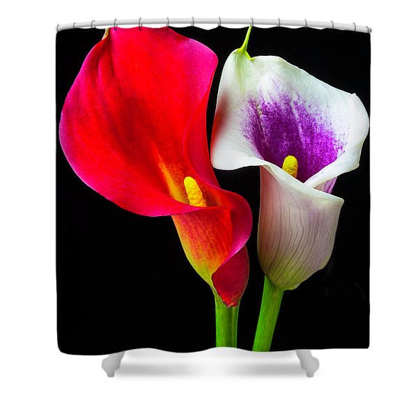Red White And Purple Calla Lilies Shower Curtain