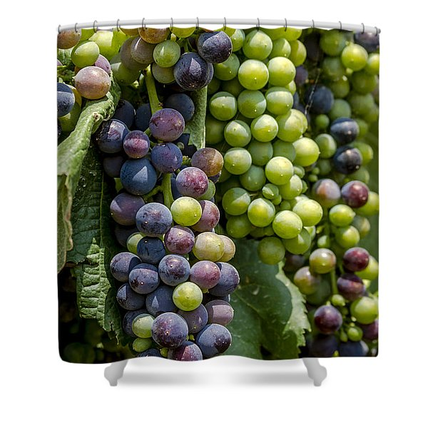 Red Wine Grapes In The Vineyard Shower Curtain