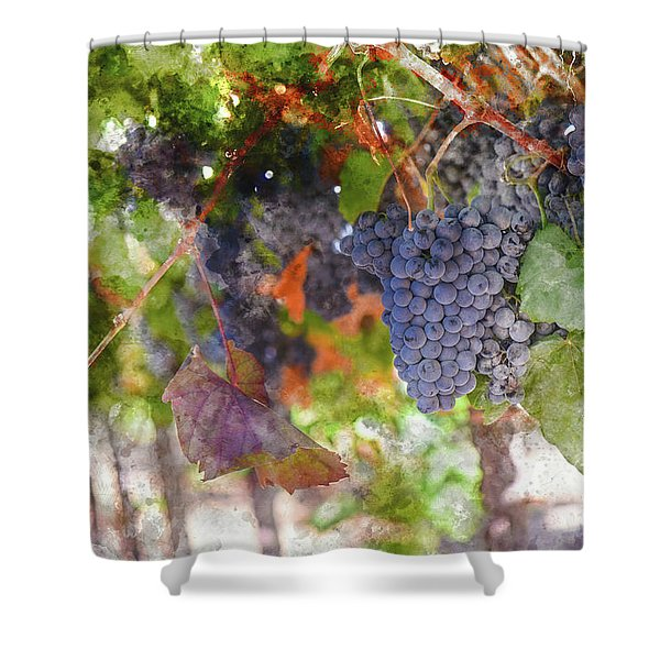 Red Wine Grapes On The Vine In Wine Country Shower Curtain
