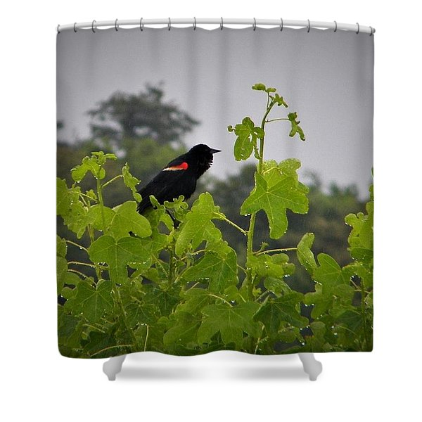 Red Winged Blackbird In The Rain Shower Curtain