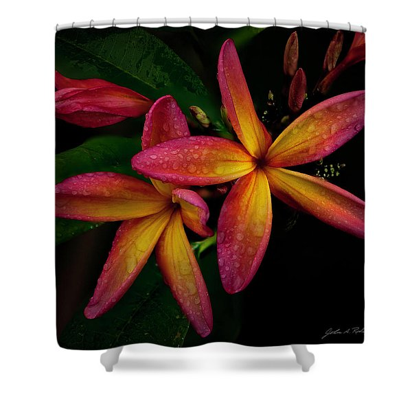 Red/yellow Plumeria In Bloom Shower Curtain