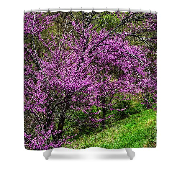 Redbud And Path Shower Curtain