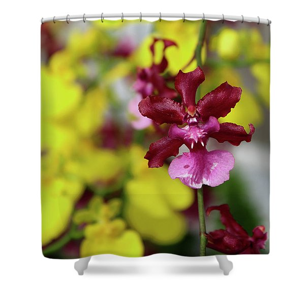 Maroon And Yellow Orchid Shower Curtain