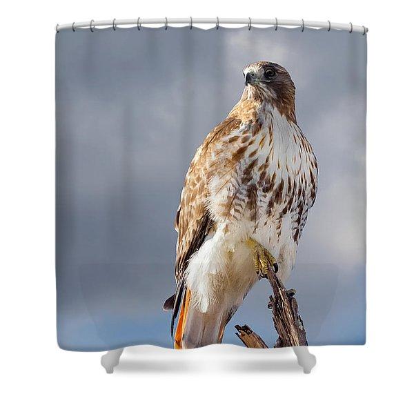 Redtail Portrait Shower Curtain