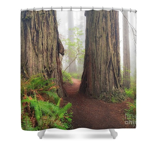 Redwood Trail Shower Curtain