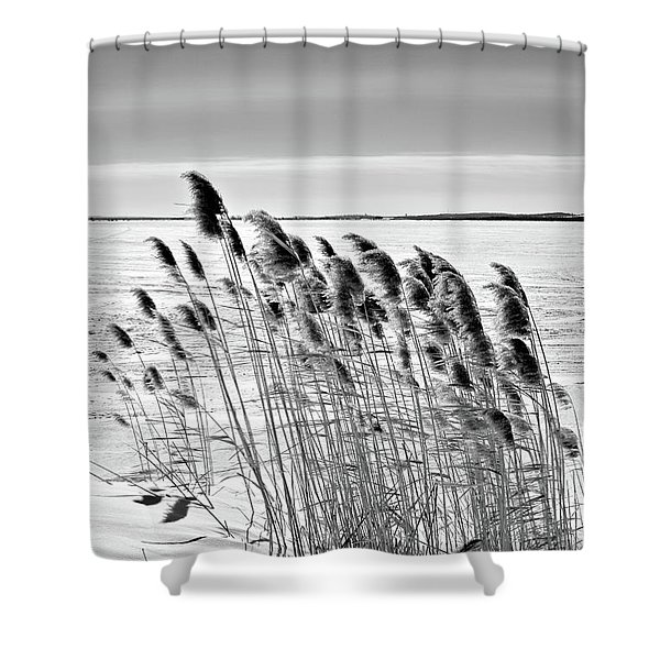 Reeds On A Frozen Lake Shower Curtain