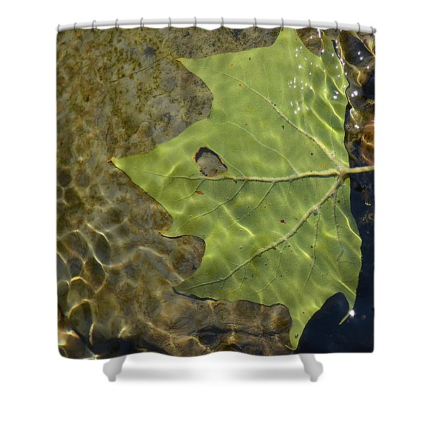 Reflected Indignation Shower Curtain