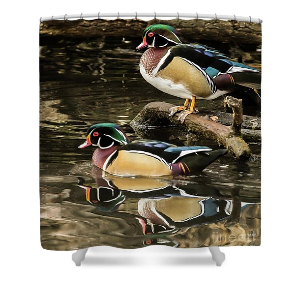 Reflections Of You And Me Wildlife Art By Kaylyn Franks Shower Curtain