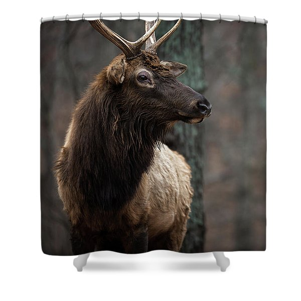 Shower Curtain featuring the photograph Regal by Andrea Silies