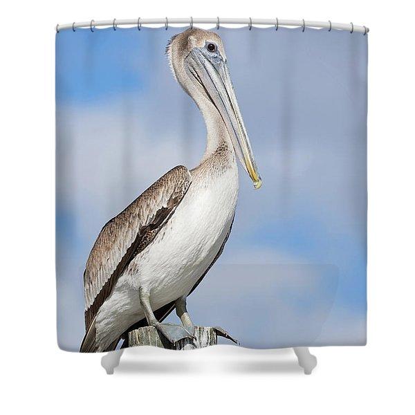 Regal Bird Shower Curtain