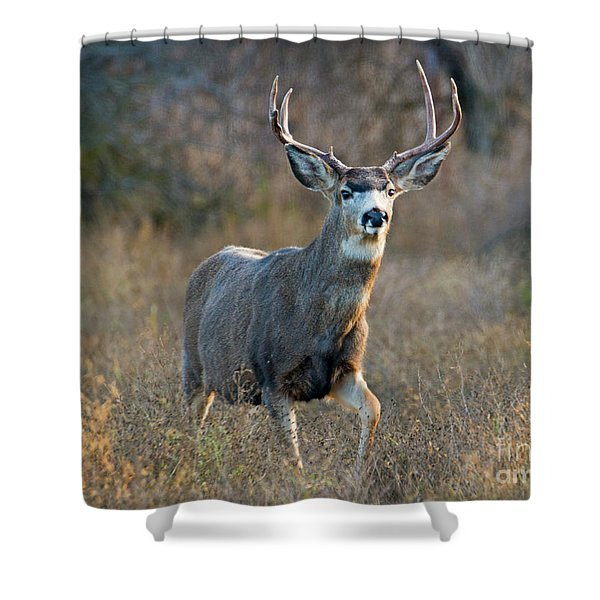 Regal Buck Shower Curtain