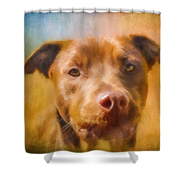 Rescued Chocolate Lab Portrait Shower Curtain