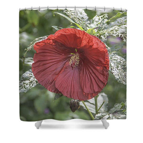 Resilient Hibiscus Shower Curtain