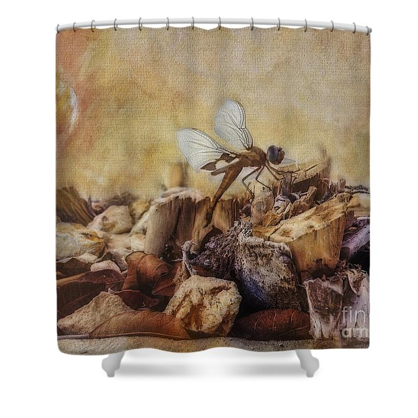 Respite Of The Mosquito Hawk Shower Curtain