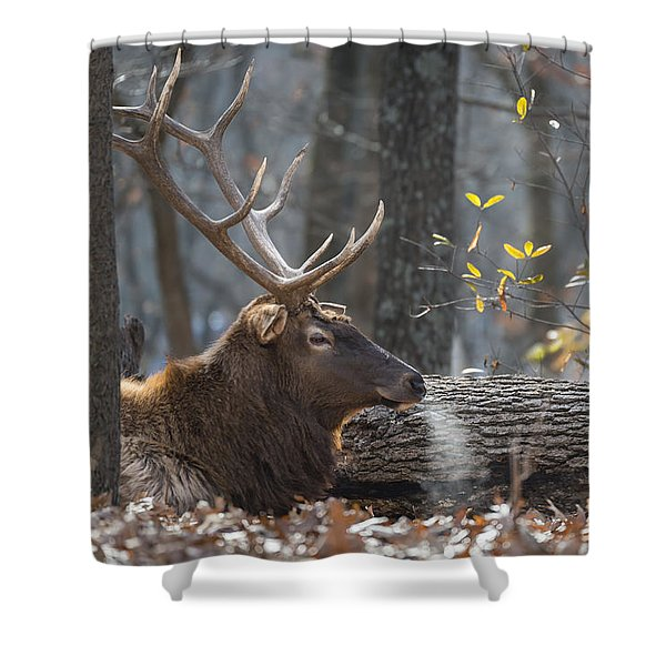 Shower Curtain featuring the photograph Resting by Andrea Silies