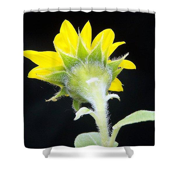 Reverse Sunflower Shower Curtain