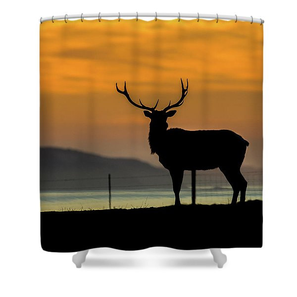 Reyes Morning  Shower Curtain