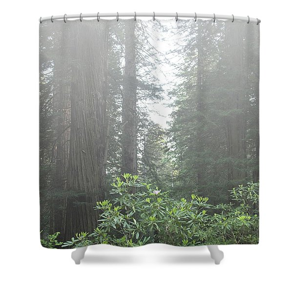 Rhododendrons In The Fog Shower Curtain