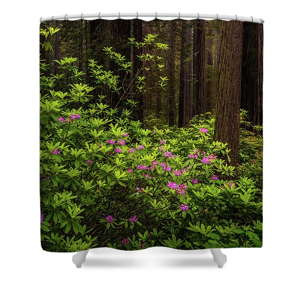 Rhododendrons Shower Curtain