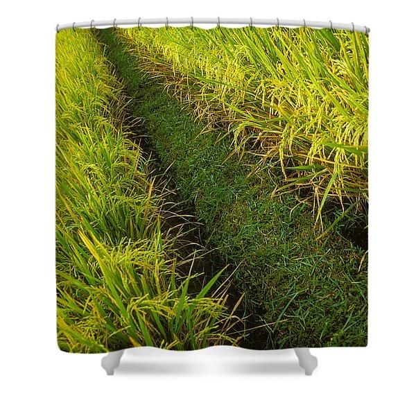 Rice Field Hiking Shower Curtain