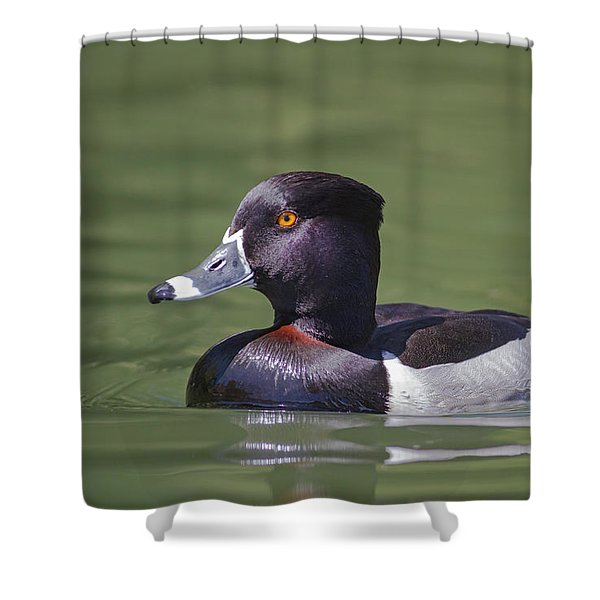 Ring-necked Duck Profile Shower Curtain