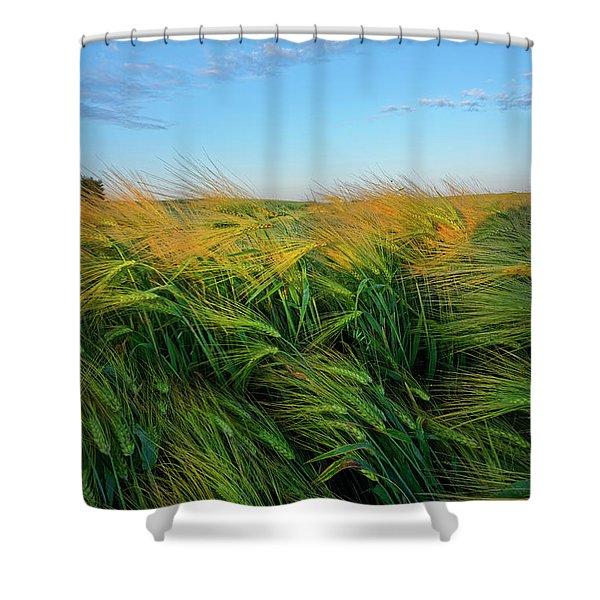 Ripening Barley Shower Curtain